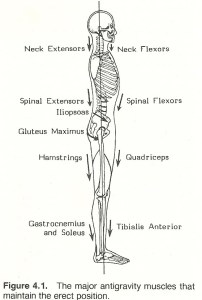 Body_Alignment_Figure1